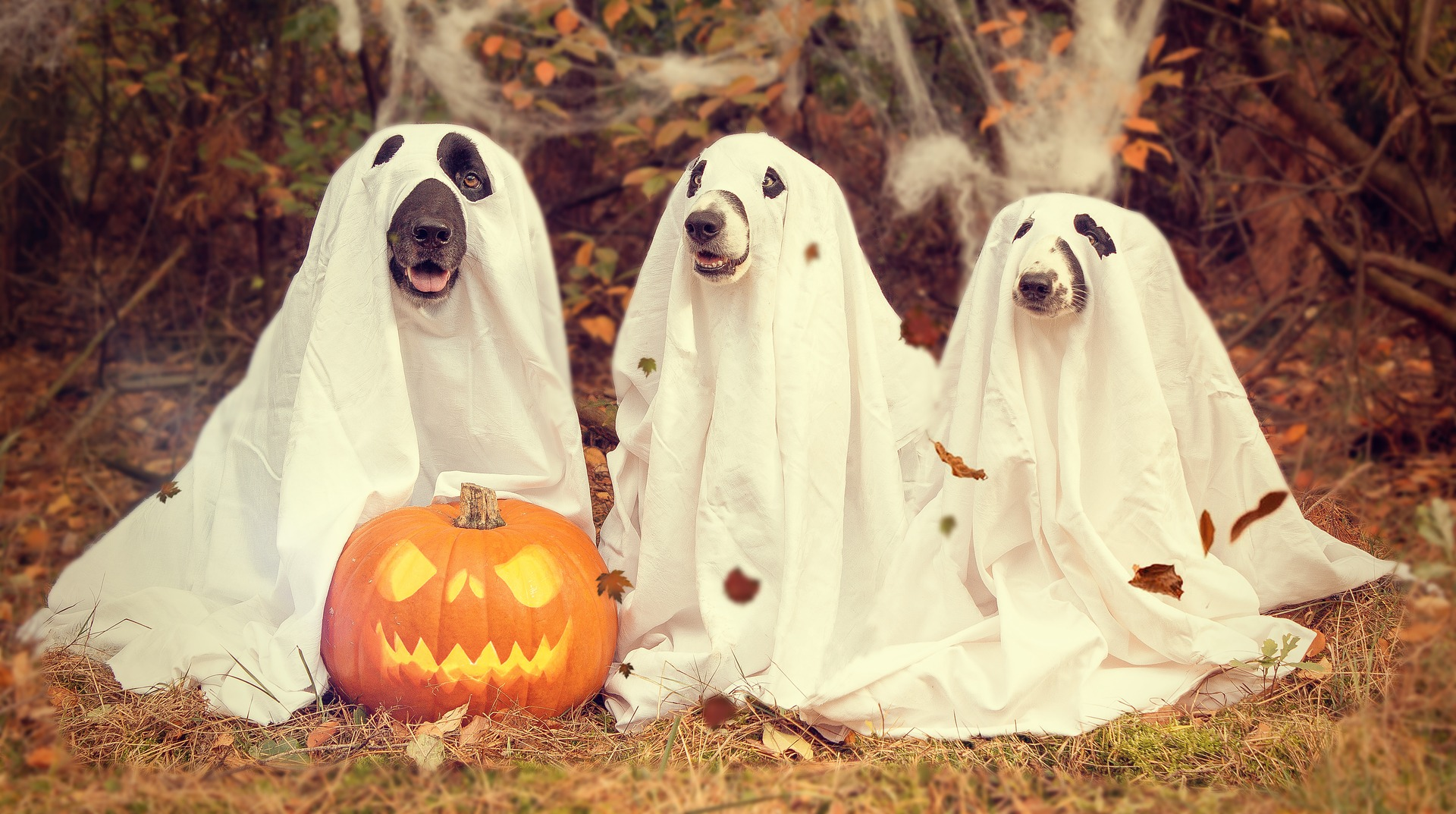halloween marketing campaigns